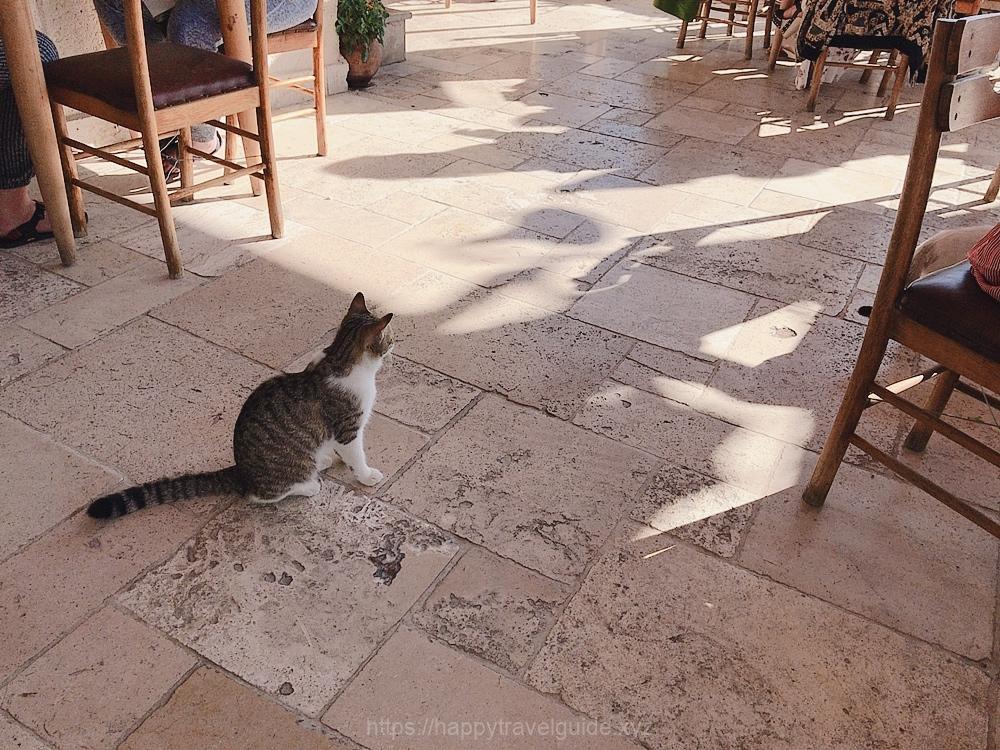 カッパドキアは猫が多い